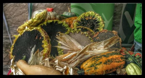 07.10.2015 Fruits de tardor  Sedó -  Ramon Sunyer