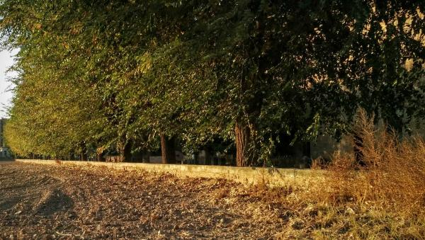 08.11.2015 arbres  Torà -  Ramon Sunyer