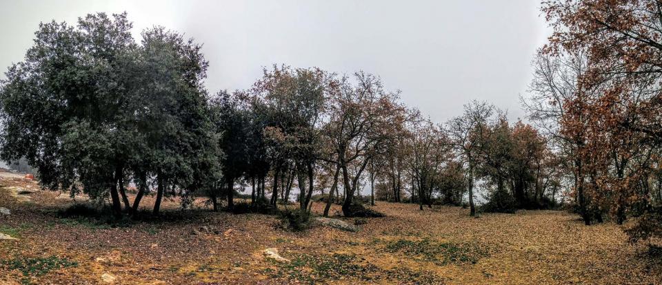 20.12.2015 bosquet a mas Vilella  Vallferosa -  Ramon Sunyer