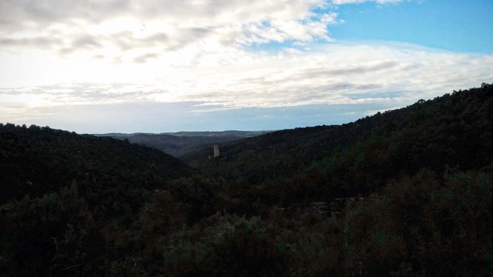 10.01.2016 boscos  Vallferosa -  Ramon Sunyer