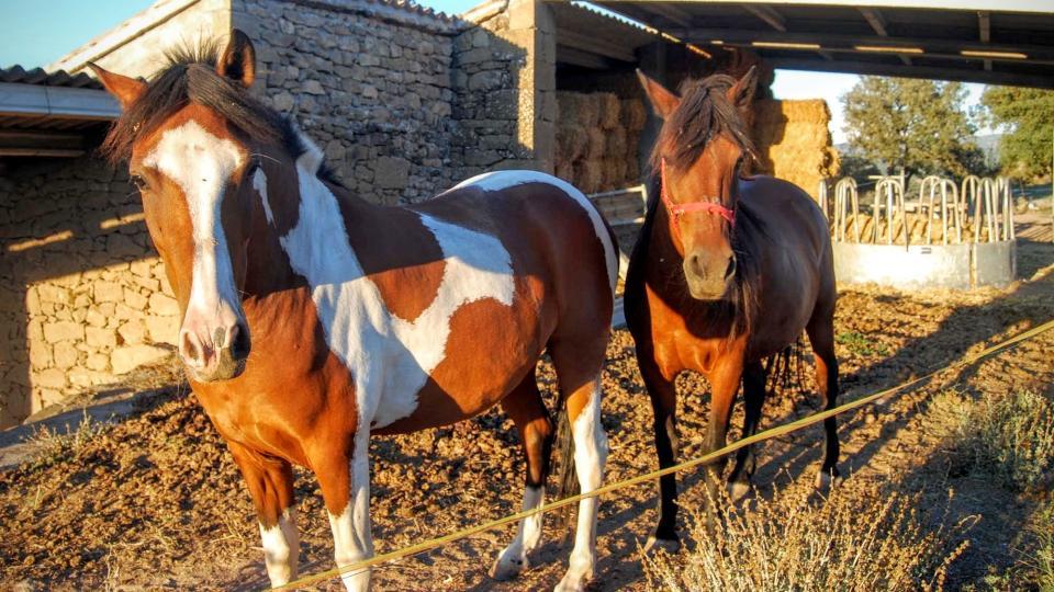 13.08.2015 Cavalls  Puigredon -  Ramon Sunyer