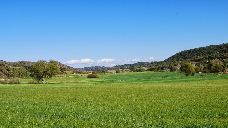 24.04.2016 cereal  Puig-Arner -  Ramon Sunyer