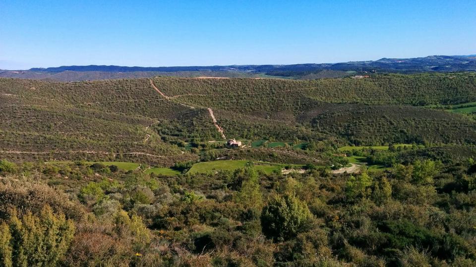 01.05.2016 Els bosc es recupera a l'entorn del monestir  Cellers -  Ramon Sunyer