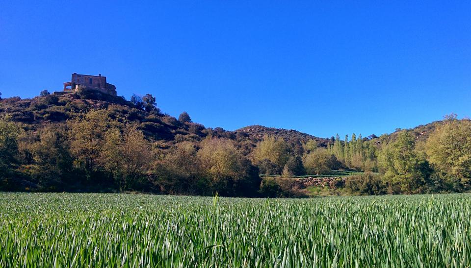 01.05.2016 Els verds dels blats a can Vila  Claret -  Ramon Sunyer