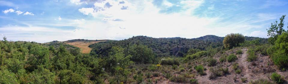 05.06.2016 bosc de guixera  Torà -  Ramon Sunyer
