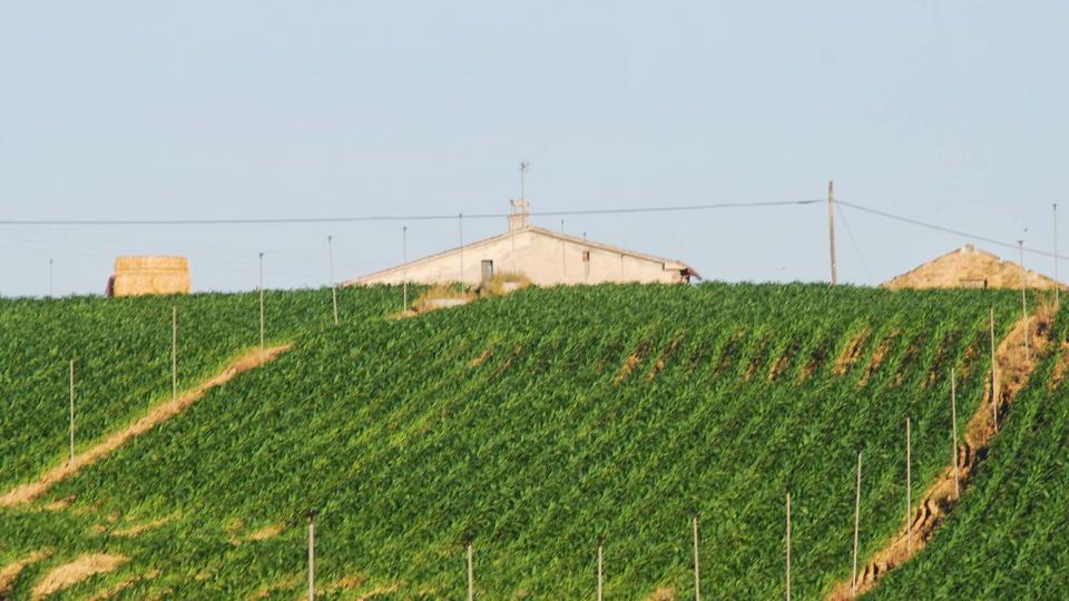 17.07.2016 paisatge  Ribelles -  Ramon Sunyer