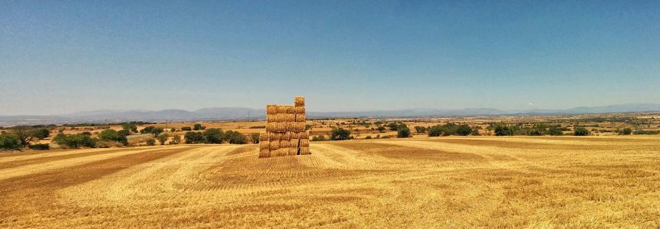 17.07.2016   Tarroja de Segarra -  Ramon Sunyer