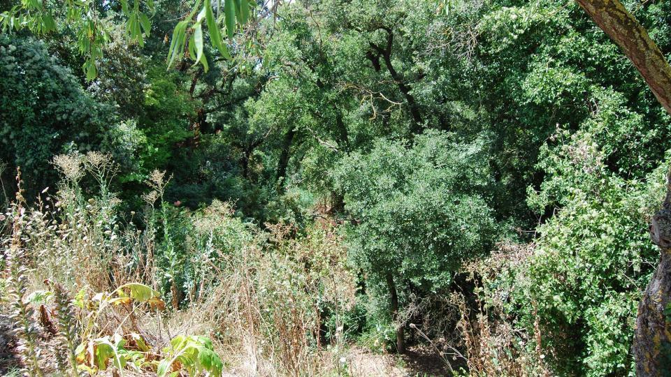 26.07.2015 rasa dels Plans  La Molsosa -  Ramon Sunyer
