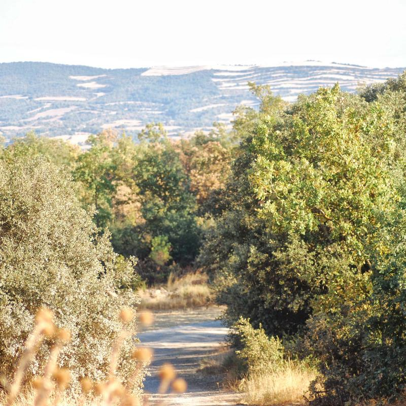 10.09.2016 Paisatge  Llanera -  Ramon Sunyer