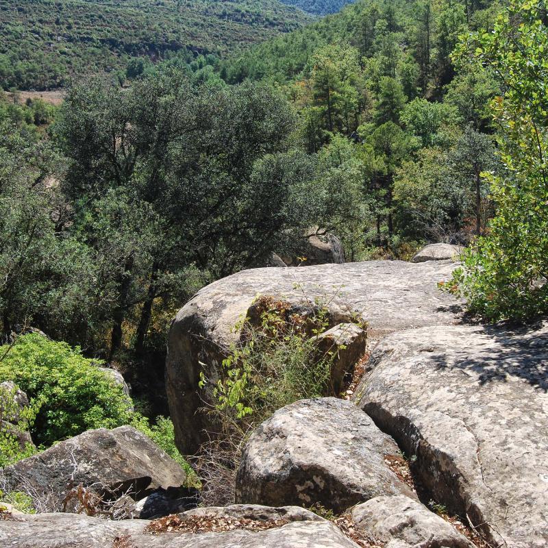 18.09.2016 paisatge  Vallferosa -  Ramon Sunyer
