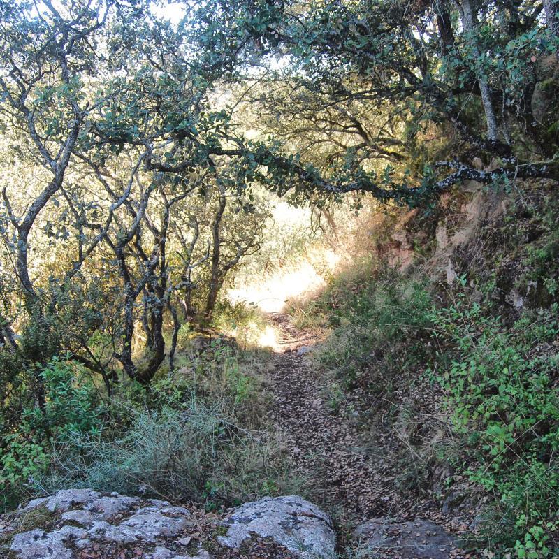 18.09.2016 camí  Vallferosa -  Ramon Sunyer
