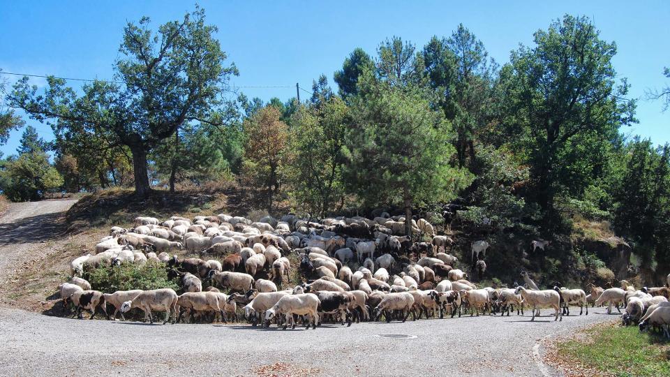 18.09.2016 ramat d'ovelles  Llobera -  Ramon Sunyer