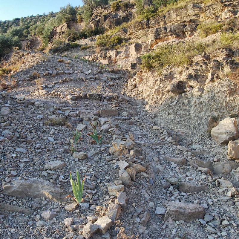 30.08.2016 camí vell  L'Aguda -  Ramon Sunyer