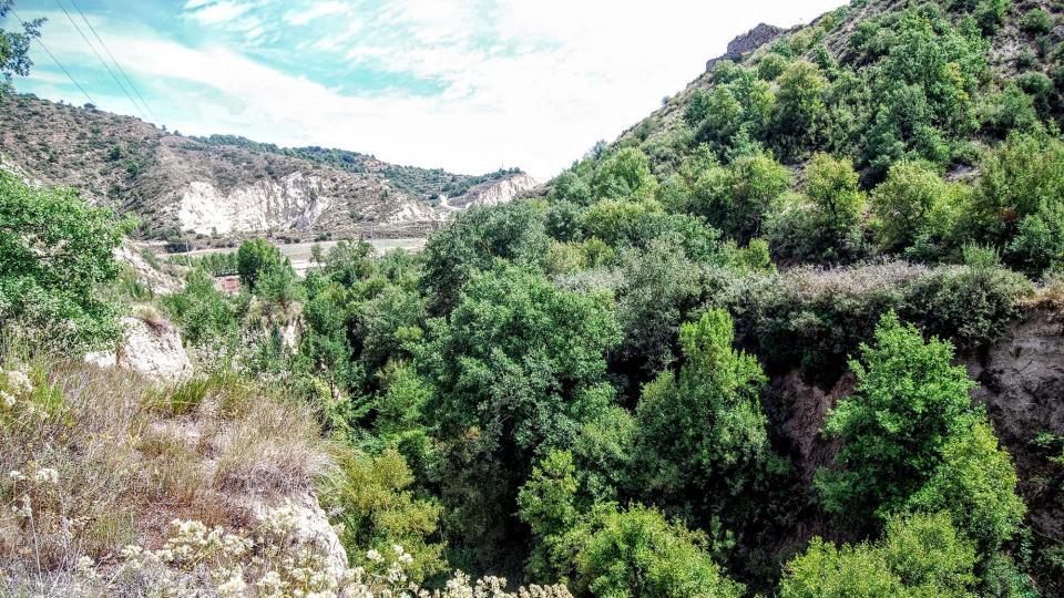 15.08.2015 rasa  Castellfollit de Riubregós -  Ramon Sunyer
