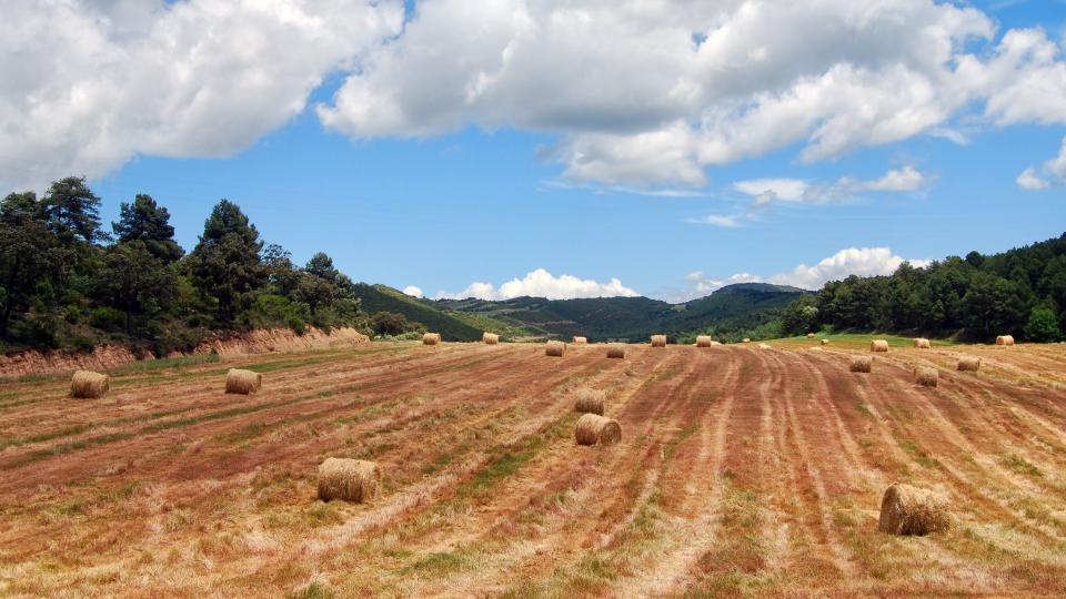 29.05.2016 paisatge  Els Quadrells -  Ramon Sunyer