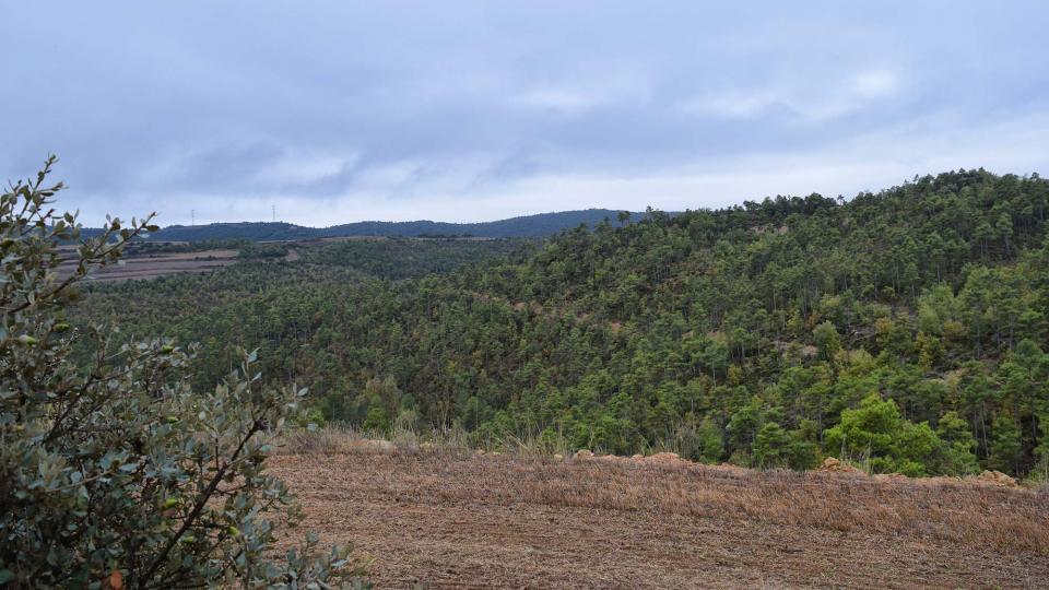 22.10.2016 boscos  Fontanet -  Ramon Sunyer