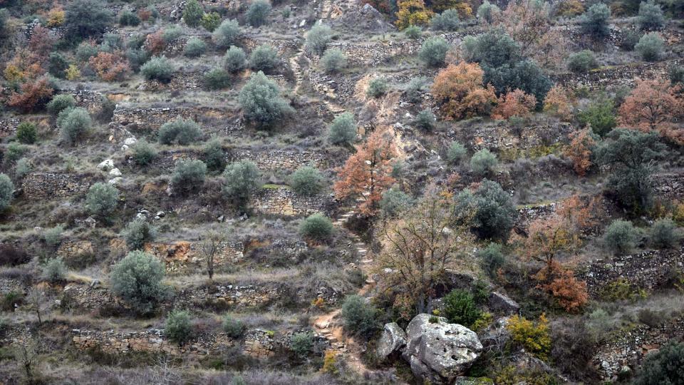 11.12.2016 Camí dels Escots  Sanaüja -  Ramon Sunyer