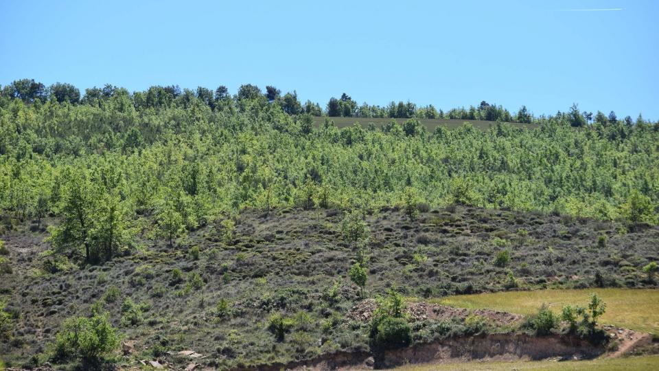 07.05.2017 paisatge  Vallmanya -  Ramon Sunyer