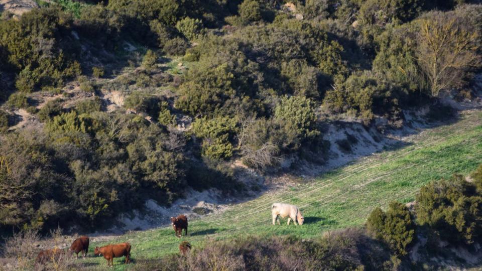 08.04.2017 bestiar pasturant  Pinós -  Ramon Sunyer