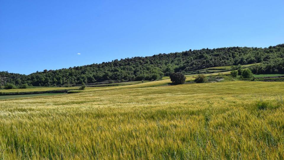 07.05.2017 Ordia a les Torrovelles  Torà -  Ramon Sunyer