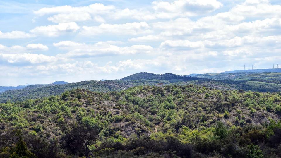 29.04.2017 paisatge als Empalous  Torà -  Ramon Sunyer