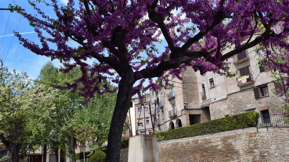 29.04.2017 Plaça de la Font  Torà -  Ramon Sunyer