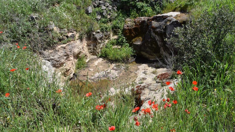 01.05.2017 Mas Pedrafita  Biosca -  Ramon Sunyer