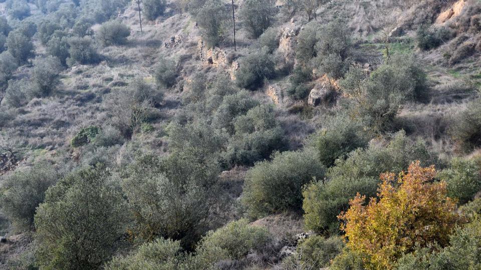 08.12.2017 Paisatge  L'Aguda -  Ramon Sunyer