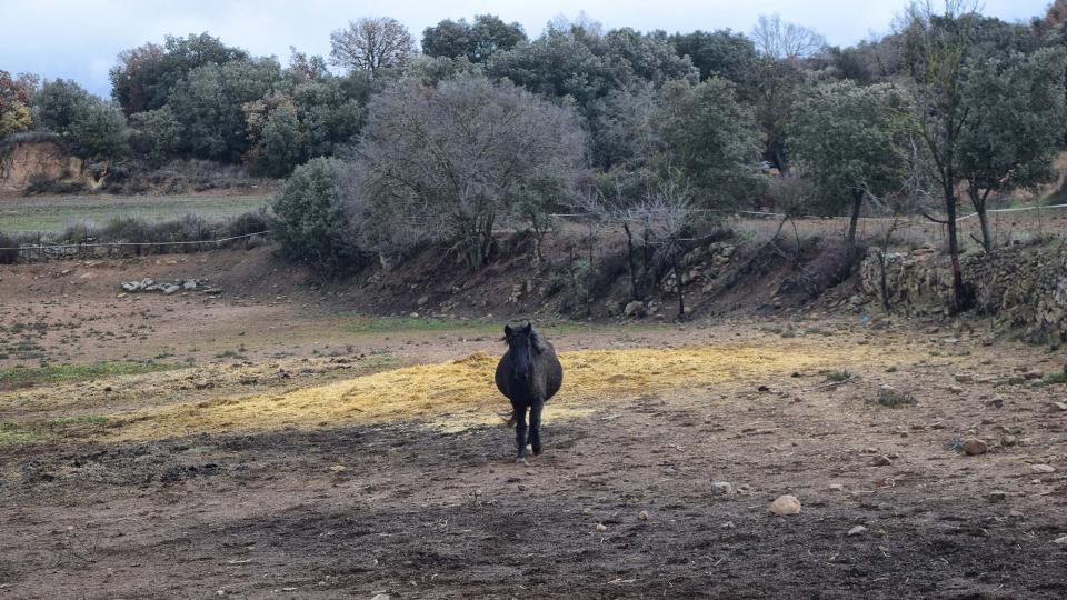 27.12.2017 cavalls  Sant Serni -  Ramon Sunyer