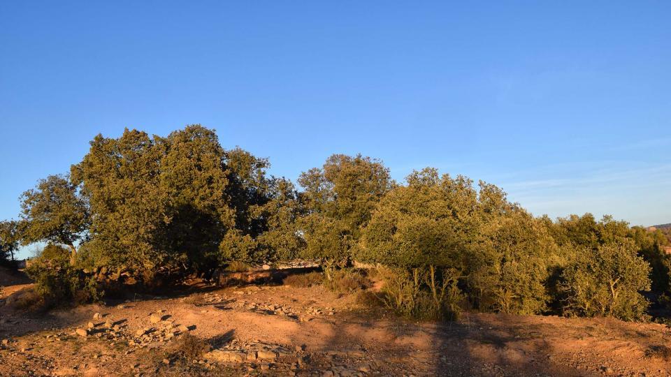 28.12.2017 paisatge  Sant Just d'Ardèvol -  Ramon Sunyer