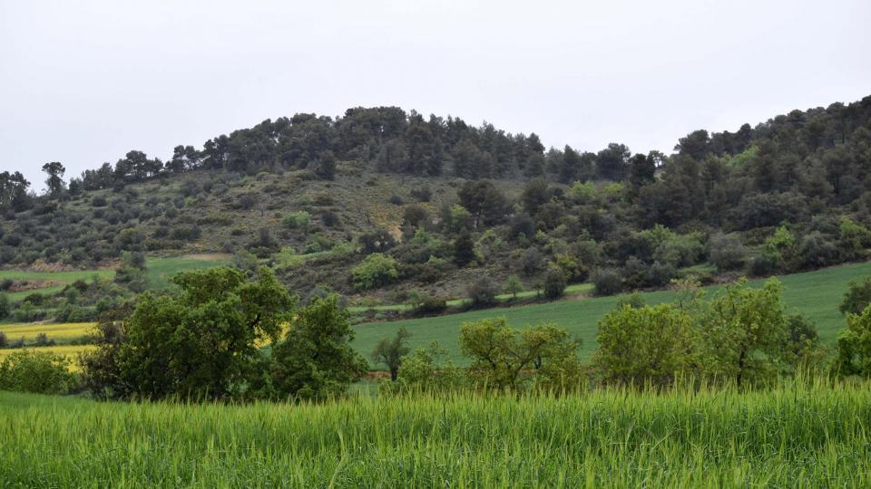 29.04.2018   Castellfollit de Riubregós -  Ramon Sunyer