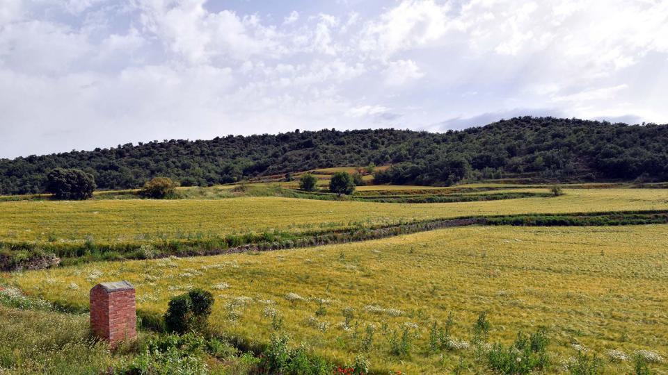 10.06.2018 sembrats a les Torrovelles  Torà -  Ramon Sunyer