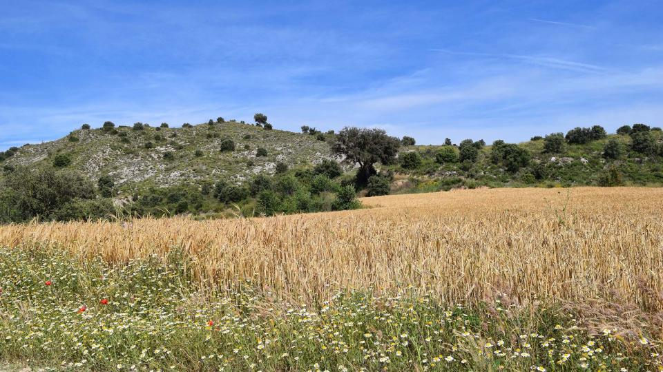17.06.2018 Els Camats  Sanaüja -  Ramon Sunyer