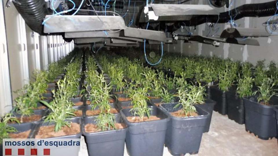 Les plantes estaven en diferents estadis de creixement -