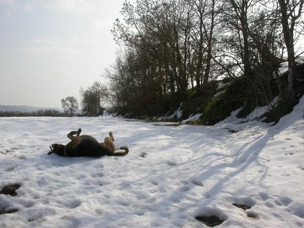 12.02.2006 La neu al cap de 15 dies  Torà -  Ramon Sunyer