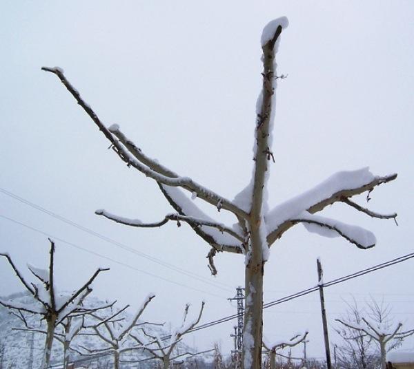 28.01.2006 Detall d'arbre  Torà -  J.Gatnau Grau
