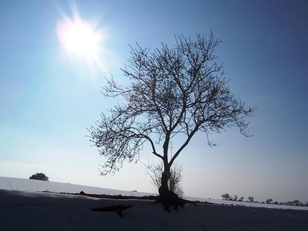 28.01.2006 Arbre soleiat  Guissona -  J.Gatnau