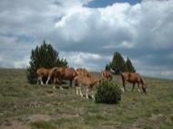 Rubió del Cantó: cavalls,eugues i poltres  Sara