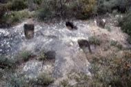 Vallferosa: Necròpolis del Clot dels Nens Xics  Ramon Sunyer