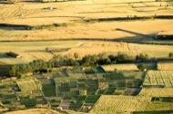 Vista dels camps de cereals des de l'Aguda