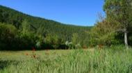 Vall del riu llanera
