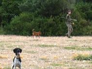 caçador amb els gossos
