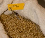 Pinós: Exposició de Cereals antics. Fira de Pinós 2008  Susanna Altarriba