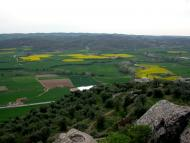 L'Aguda: Troços sembrats de colza  Ramon Sunyer
