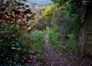 Torà: Camí dels horts  Carmen Aparicio