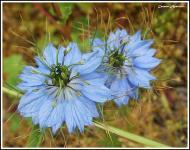 : Flora i fauna  Carmen Aparicio