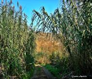 : Camí de canyes del riu de Torá  Carmen Aparicio