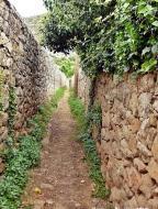 : Camins dels horts  Carmen Aparicio