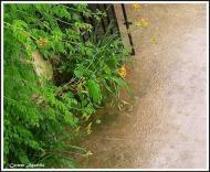 Torà: pluja  Carmen Aparicio
