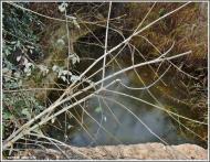 Torá: El riu gelat  Carmen Aparicio